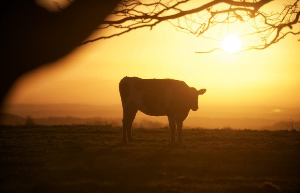 面对极端天气,大自然动物显得相当茫然。