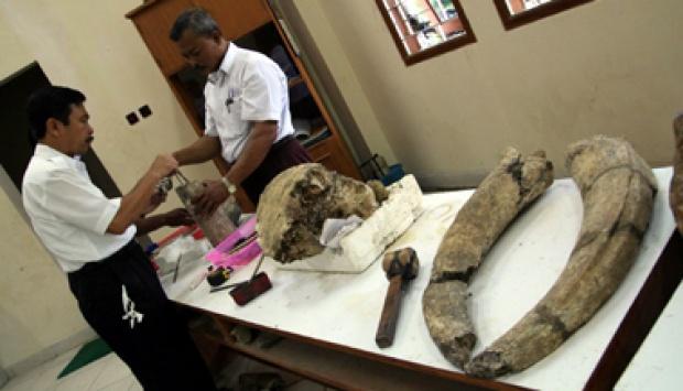 印度尼西亚首度发现灭绝的古代巨猿