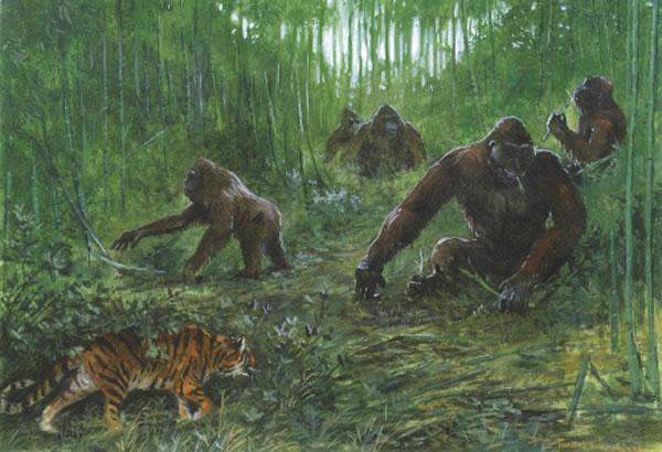 步氏巨猿(Gigantopithecus blacki)复原图