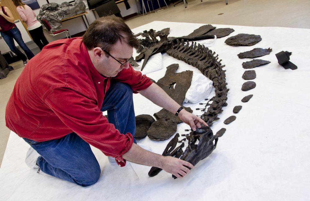 这是在组装进行公开陈列之前骨骼按照身体结构摆放在地面上