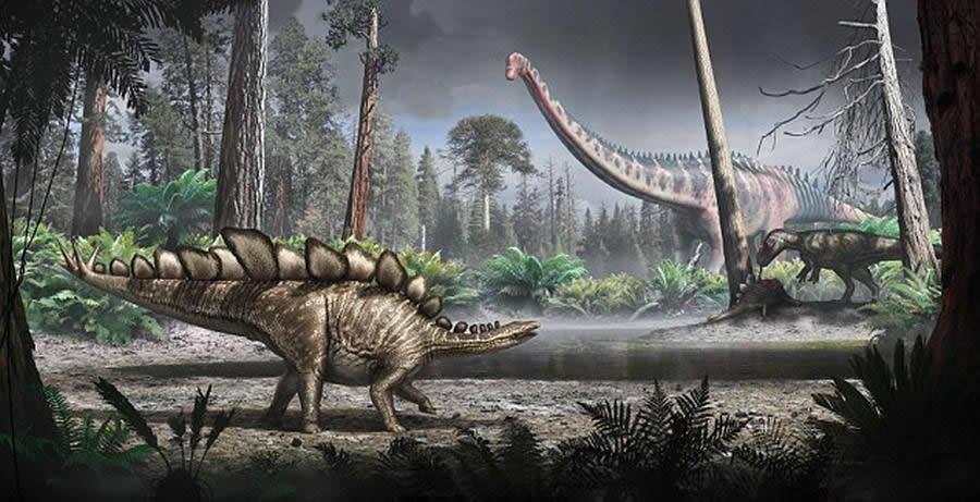 """""""索菲""""体长5.6米,高2.9米,事实上,这是一只体型较小的剑龙,最大的剑龙体长可达到9米。这具剑龙骨骼历史可追溯至1.5亿年前,是在美国怀俄明州远古亚热带森林"""