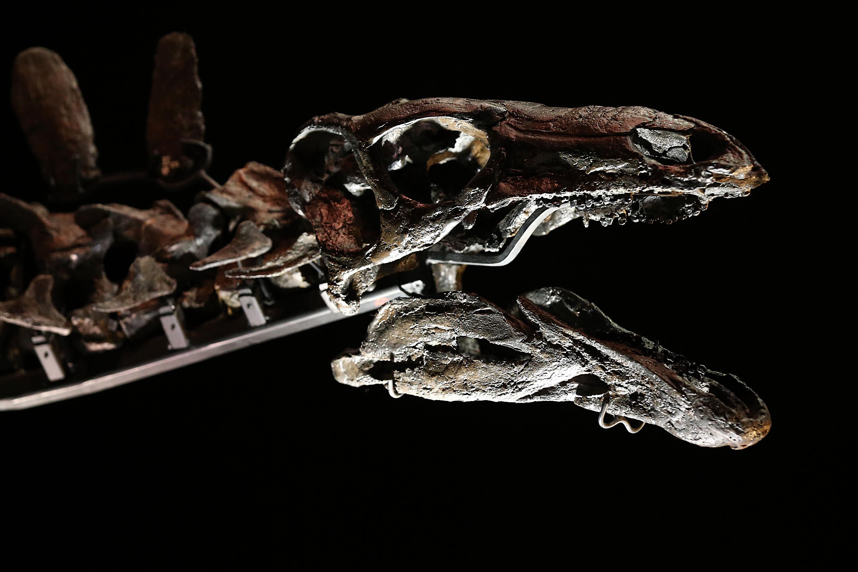 """""""索菲""""的头骨较小,并且结构非常微妙复杂,是由50多个小骨骼构成,科学家很难对每块头骨进行独立分析研究。"""