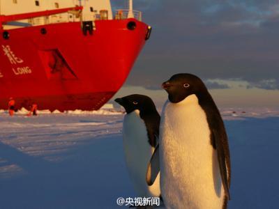 中国雪龙号科考船在南极卸货引企鹅围观