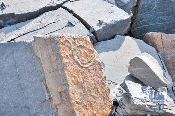 矿区路边的石头也能见到化石痕迹