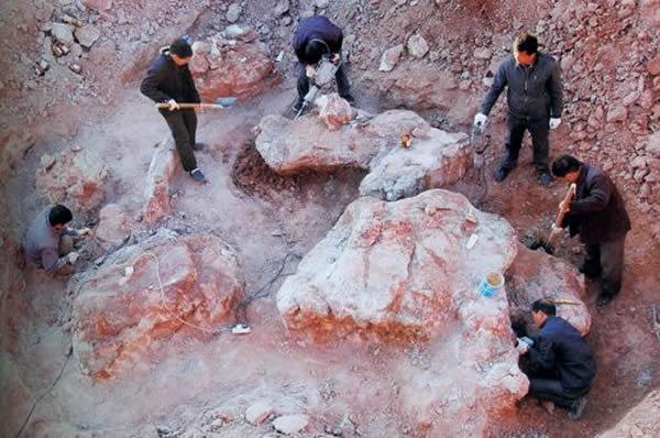 荐椎化石挖掘现场