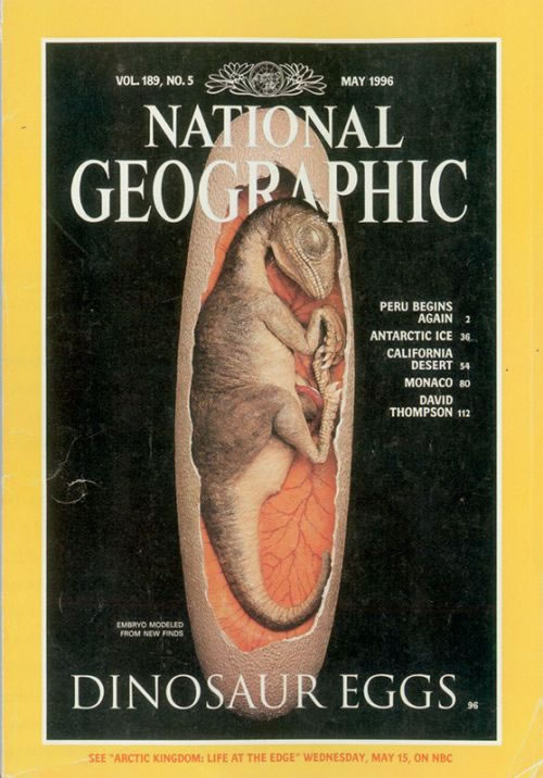 """""""路易贝贝""""登上《美国国家地理》杂志封面"""