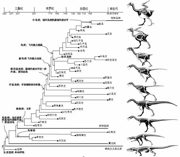 鸟类主要特征的演化