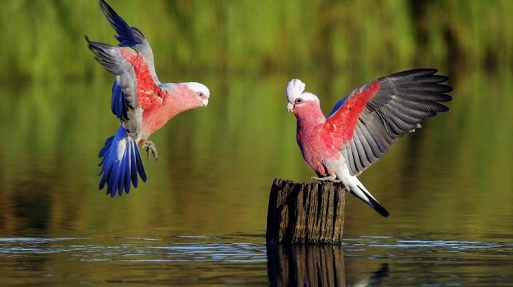 新的鸟类谱系图帮助澄清现代鸟类如何在物种大灭绝事件后快速出现