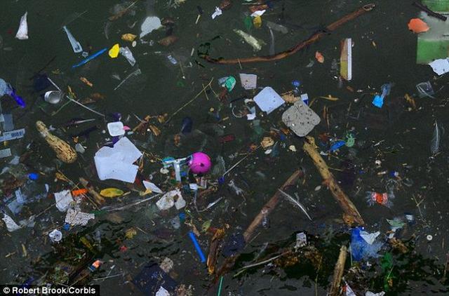 科学家最新研究显示,全球海洋漂浮的塑料垃圾重量接近269000吨,将严重污染海洋环境,导致大量海洋生物死亡。