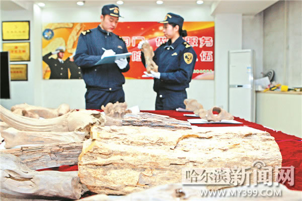 哈尔滨海关在一批寄往台湾的普通邮件包裹内查获26件古生物化石