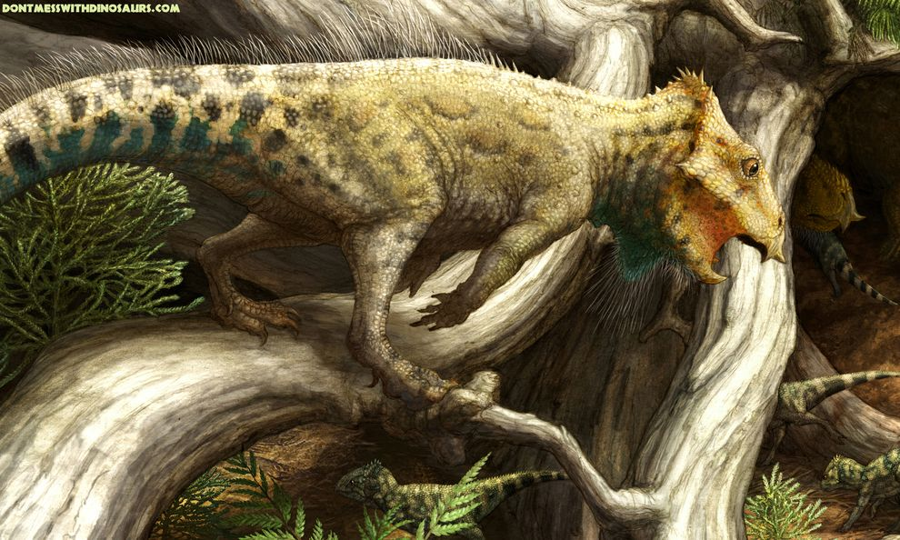 名为Aquilops americanus的小型恐龙(示意图如上)是在美洲发现的三角龙亲属中,已知年代最久远的一种。 Illustration by Brian