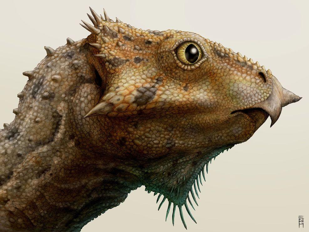 Aquilops americanus和其他有角恐龙一样,有弯曲的喙和小小的角,但是它并没有表亲三角龙身上的颈盾和长长的眉角。 Illustration by