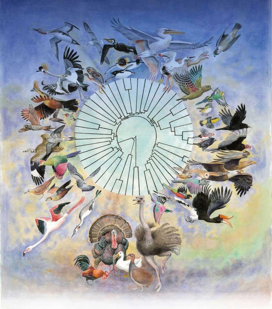 科学家通过研究48个鸟类物种的基因序列发现鸟类从恐龙进化而来有力证据