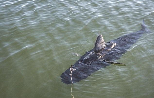 """机械鱼""""幽灵泳手""""可潜入敌军水域,刺探军情。"""