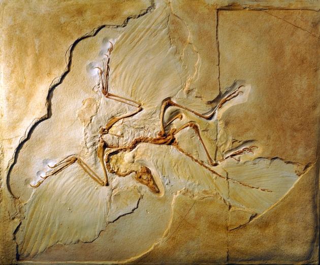 """始祖鸟的""""第一只鸟""""地位受到威胁"""