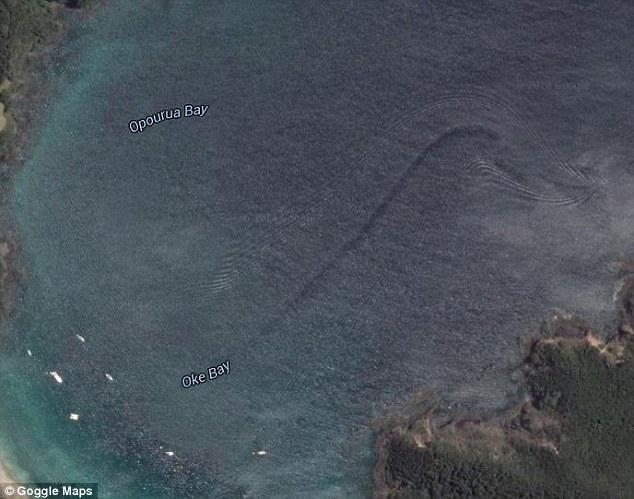 谷歌地图在新西兰北部奥克湾海域拍到巨大神秘海洋生物