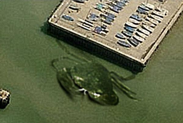 10月一张航拍照显示,一只巨型螃蟹潜伏在英格兰海岸浅水区,长达15公尺。