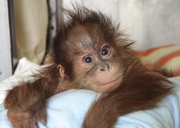 Bulu Mata(图)的母亲在它出生后不久便离世。