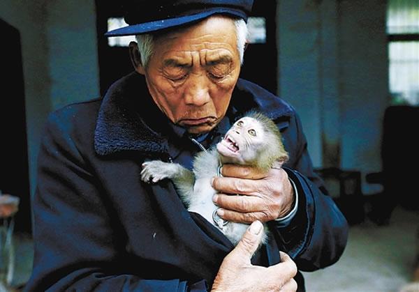 老齐说,这么多年,没动手打过一只猴子,是猴子让他有生活费,有钱造房。他与猴子相依为命。