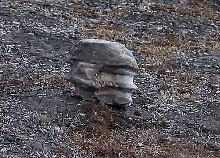 科学家在极地寻菇被2亿年蛇颈龙头骨化石绊倒