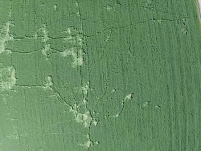 距离墨西哥城24公里的特斯科科市在平安夜惊现巨大麦田怪圈
