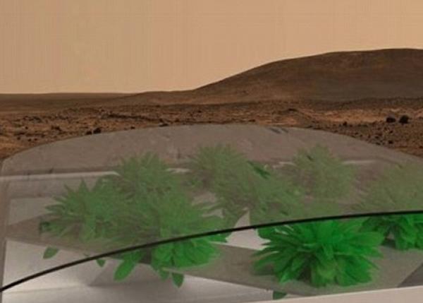 英国有大学生计划在火星上种菜。图为火星种菜构想图。