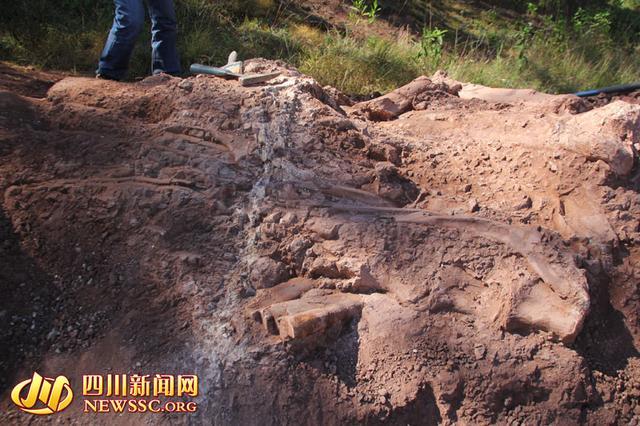 2014年12月中旬,在会理县南阁乡一山顶现场,埋藏在地表的恐龙化石,会理县文管所供图