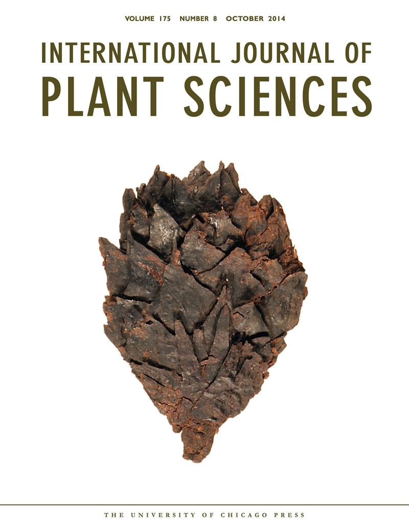 """蒙古早白垩世地层中发现植物""""木乃伊""""化石——新种""""周氏似纵"""""""