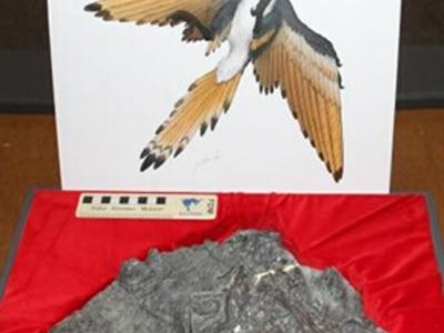 日本福井县胜山市发现距今1亿2千万年的白垩纪原始鸟类化石