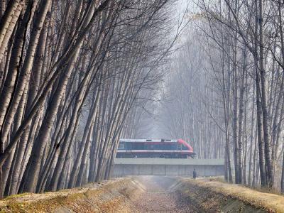 印度帕姆波雷的白杨树与火车道