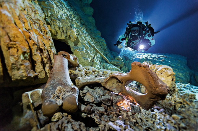 在潜水员发现奈亚遗骸的水下洞穴「黑洞」底部,散落着至少26只冰川时期动物的骨头,包括一只与大象相似的「嵌齿象」骨头。 Photograph by Paul Ni
