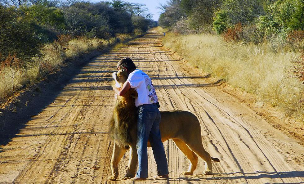 """狮子""""宰恩""""和索尔姆关系亲密经常拥抱亲吻"""