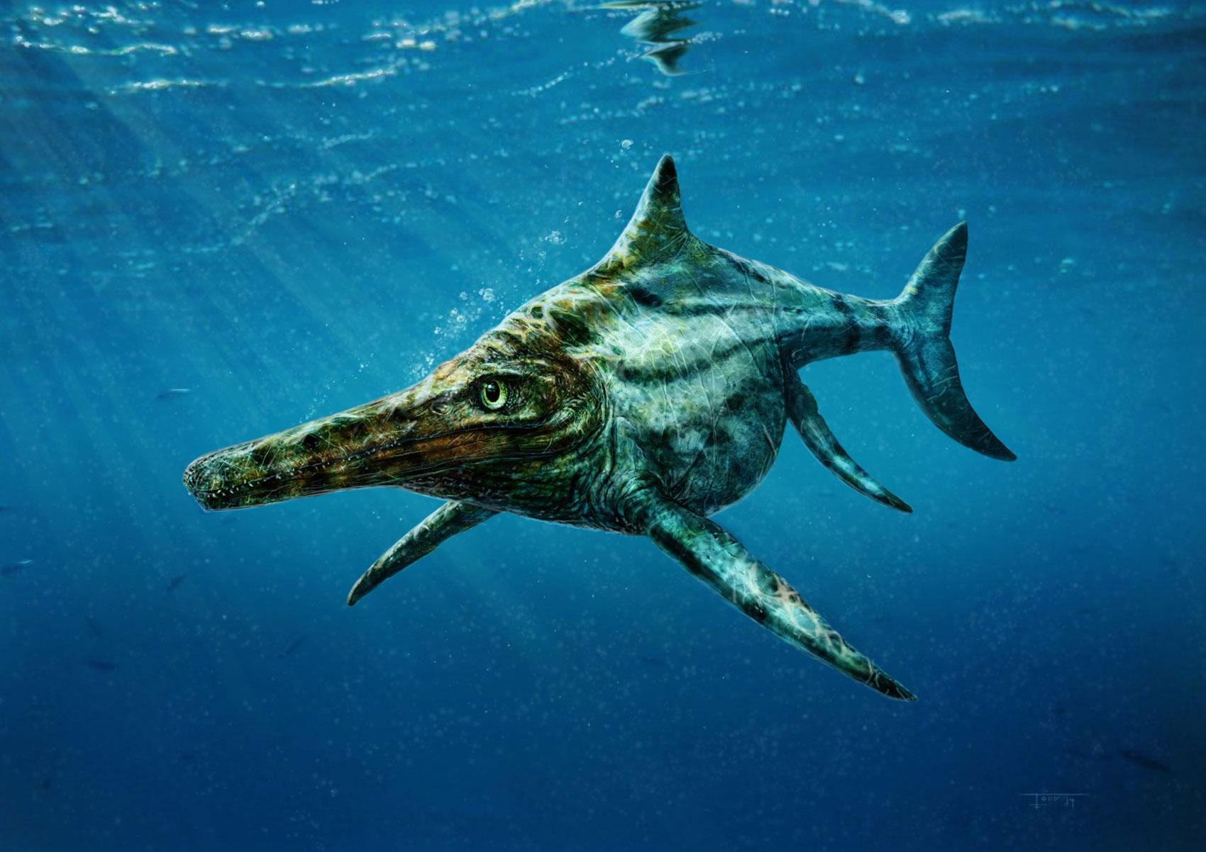 科学家最新发现一种生活在侏罗纪时代海洋的巨大爬行动物Dearcmhara shawcrossi