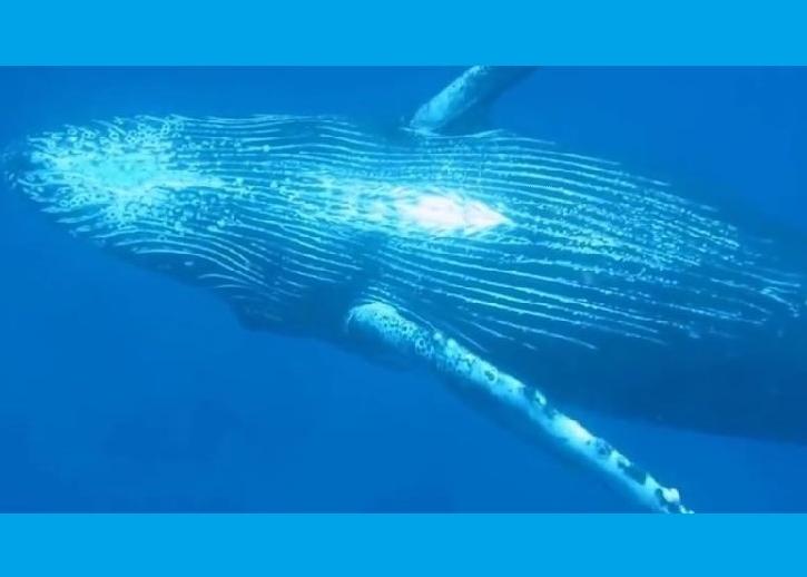 鲸鱼在深海中起舞