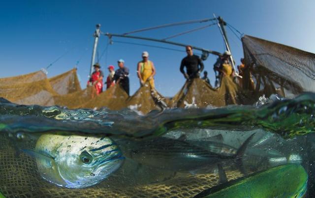人类给海洋和海洋生物带来史无前例的危害图片