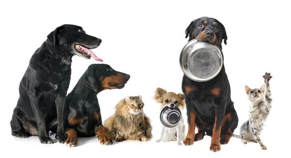 墨西哥研究发现蜂胶是宠物狗的健康保护神