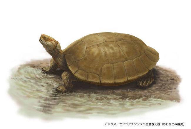 """1.2亿年前阿杜库斯龟属新种""""千石峡阿杜库斯龟"""""""