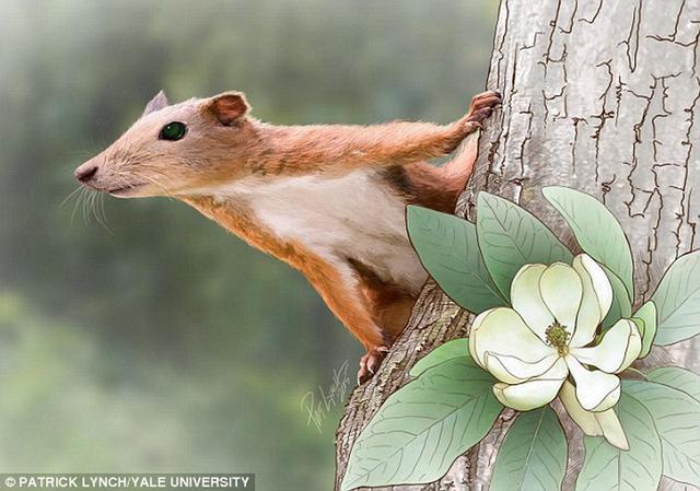 """6500万年前最早期灵长目动物""""加托里猴""""是一种类似于松鼠的树栖哺乳动物"""