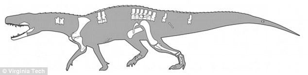 古生物学家发现了一种古老的肉食性爬行动物,具有如同牛排刀般的锋利牙齿。Nundasuchus songeaensis生活在距今2.4亿年前,长度约为3米,在沉重