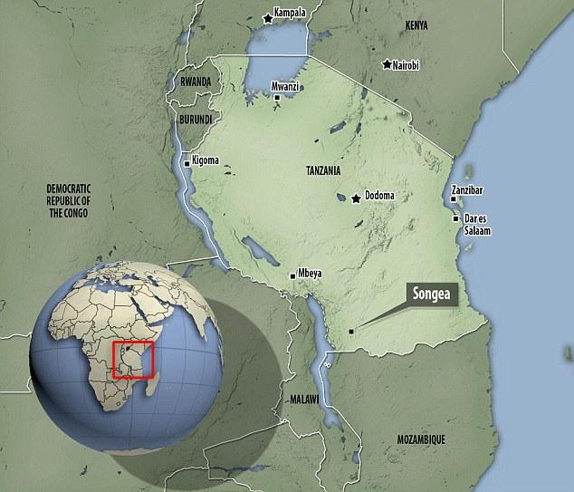 2007年,古生物学家在坦桑尼亚西南部的小镇Songea附近发现了这种古老爬行动物的化石。它的骨架已经散落成数以千计的碎片,古生物学家花了超过1000个小时才完
