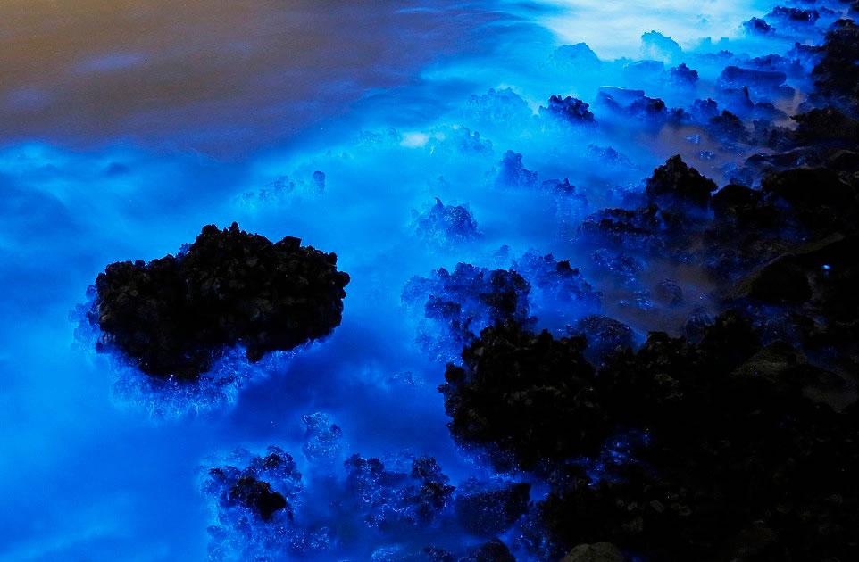 水体中含有大量氮和磷,使浮游生物和夜光藻大量繁殖。