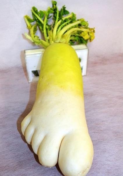 日本农夫幸裕种出俨如人类脚板的萝卜