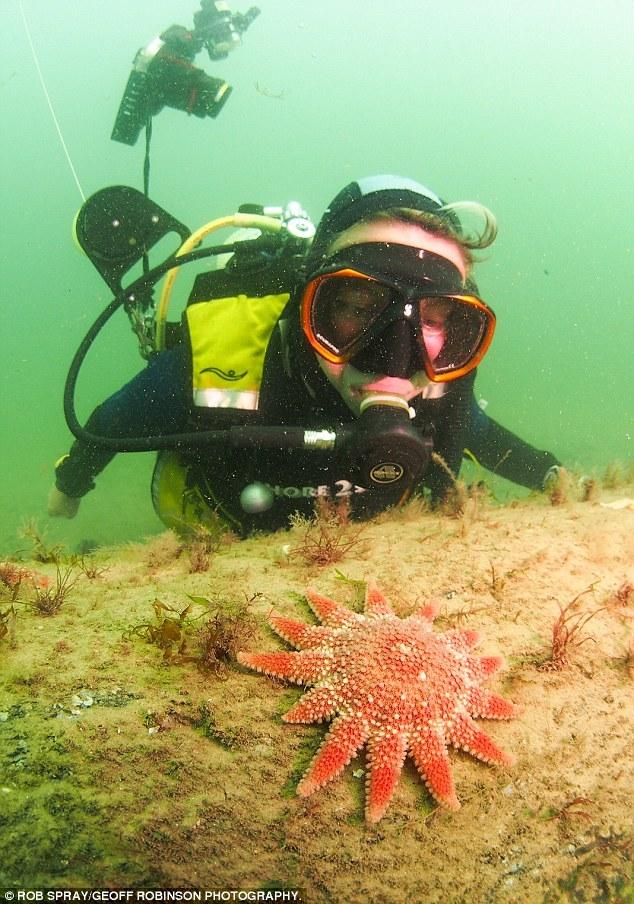 """这位在北海潜水约有16年的潜水员表示:""""发现这座古老的橡树森林,叫我激动万分。你根本想不到在快速潜水时竟会发现一座森林。"""""""
