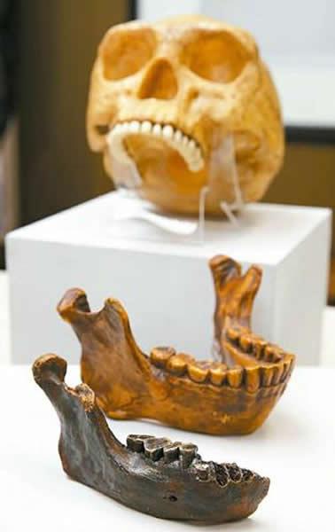 台湾科博馆和日本、澳大利亚学者合作,在澎湖海域发现距今约45万至19万年前的澎湖原人化石。其下颚骨化石模型(前)与北京直立人下颚骨化石模型(中)比较,更为粗壮、