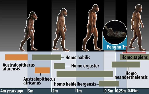 """""""澎湖1号""""化石可能是人类进化历程中的缺失环节,能够匹配复杂的人类进化时间表。"""