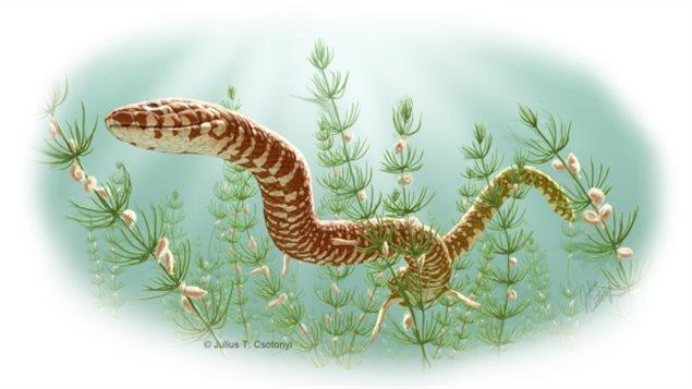 发现1.7亿年前的蛇类化石 拥有四条腿
