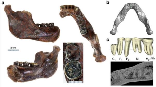 台湾目前发现的最古老人类化石——澎湖原人