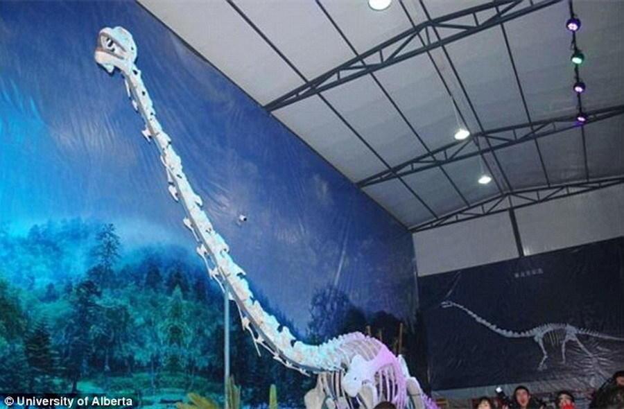 如图所示,这是綦江博物馆陈列的綦江龙骨骼模型,大量参观者前来观看。
