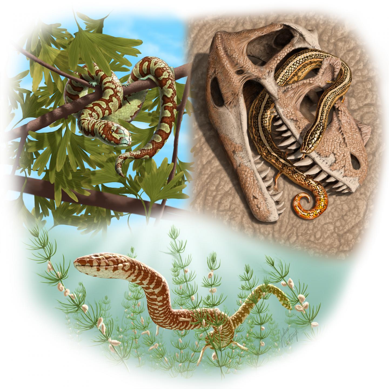这些蛇类(上面概念图)居住在不同的栖息地