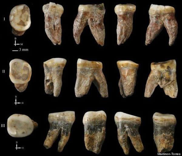 Martinón-Torres和她的同事们分析了来自化石中的9颗牙齿,与其它人类物种样本相比,它们的历史时期能够追溯到1.2万年到6万年间。